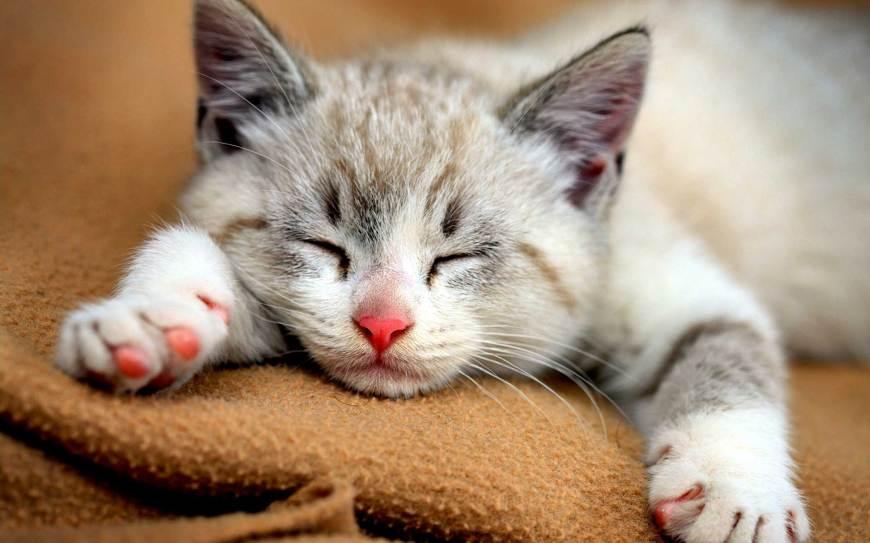 3 Kucing Miliarder di Dunia, Punya warisan Miliaran Rupiah